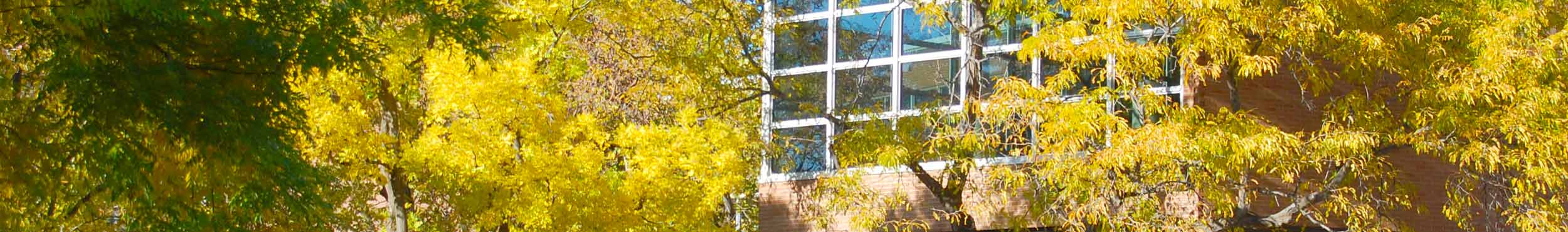 A photo of trees behind the Union with yellow leaves.